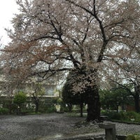 Photo taken at 桜樹広場 by Mitsuhiro F. on 4/7/2016