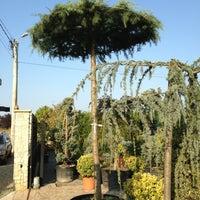 Photo taken at Adenandra Gardening by Bonţe A. on 9/4/2013