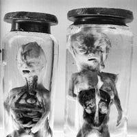 Photo taken at Hunterian Anatomy Museum by David M. on 9/14/2012