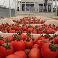Photo taken at uysallar tarım kayaburnu modern sera tesisleri-2 by Murat U. on 11/9/2014