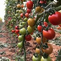 Photo taken at uysallar tarım kayaburnu modern sera tesisleri-2 by Murat U. on 12/19/2016