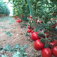Photo taken at uysallar tarım kayaburnu modern sera tesisleri-2 by Murat U. on 11/9/2015