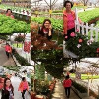Photo taken at Big Red Strawberry Farm (Agro Tourism Garden) by Joan W. on 7/4/2015