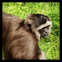 Photo taken at Monkey World - Ape Rescue Centre by Corinne K. on 9/14/2012
