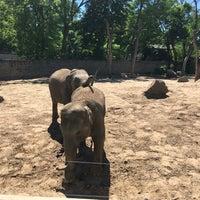 Photo taken at Ogród Zoologiczny by Przemysław S. on 5/27/2017