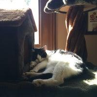 Cat Cafe Melbourne Reviews