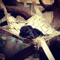 Photo taken at Great Ape House at the National Zoo by Candace W. on 9/16/2012