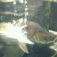 Photo taken at National Aquarium by Brad P. on 1/13/2013