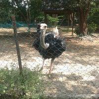 Photo taken at Mini Zoo Taman Teruntum by Ainnur N. on 5/1/2014