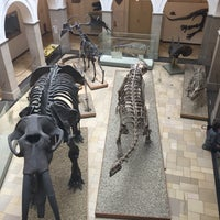 Photo taken at Paläontologisches Museum by Gül A. on 7/17/2017
