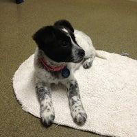 Photo taken at Animal Welfare League of Arlington by Denise C. on 2/3/2013