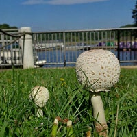 Photo taken at Lake Accotink Park by Cecilia S. on 8/28/2014