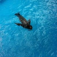 8/16/2013 tarihinde Patrick C.ziyaretçi tarafından California Sea Lions Pool'de çekilen fotoğraf