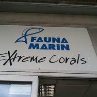 Das Foto wurde bei Fauna Marin Extreme Corals von Martin S. am 11/2/2013 aufgenommen