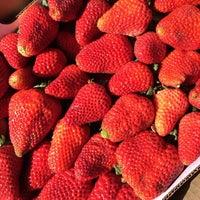 Photo taken at Bobalu Strawberries by Christof U. on 3/19/2014