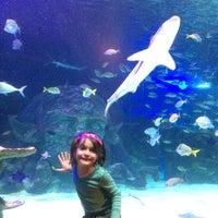 SEA LIFE Michigan Aquarium - 12 tips