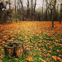 Снимок сделан в Природный заказник «Воробьёвы горы» пользователем Александр П. 10/26/2013