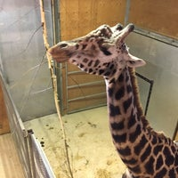 Photo taken at Noah's Ark Zoo Farm by Andy S. on 10/10/2016