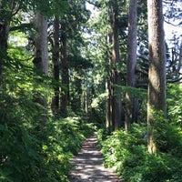 6/17/2017にHiroyasu @.が箱根旧街道 杉並木で撮った写真