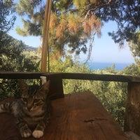 7/23/2017 tarihinde Erol G.ziyaretçi tarafından yerdenizkamp'de çekilen fotoğraf