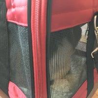 10/4/2016にSageがBluePearl Veterinary Partnersで撮った写真