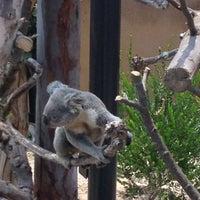Foto scattata a Koala Exhibit da Tawmis L. il 6/30/2013