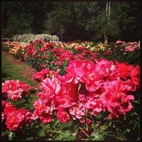 Photo taken at Raleigh Rose Garden by AJ V. on 5/26/2013