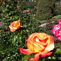 Photo taken at International Rose Test Garden by william c. on 5/20/2013
