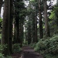 9/13/2018にBecka B.が箱根旧街道 杉並木で撮った写真