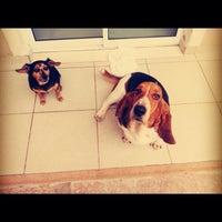 Photo taken at Mundo Pet - Pet Shop by Flavi R. on 1/18/2014