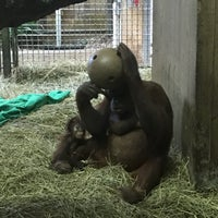 Photo taken at Great Ape House at the National Zoo by Taylor H. on 3/19/2017