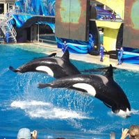 Photo taken at SeaWorld San Diego by Claudia A. on 12/8/2012