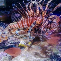 Photo taken at ABC Aquarium by Louis H. on 1/13/2013
