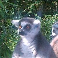 Photo taken at Apenheul Primate Park by Edward v. on 9/2/2012