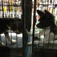 Photo taken at The Pet Corner by Chelseymango on 7/19/2012
