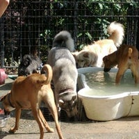 Photo taken at Tompkins Square Park Dog Run by Noah W. on 5/13/2012
