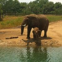6/16/2012 tarihinde Nick R.ziyaretçi tarafından Indianapolis Zoo'de çekilen fotoğraf