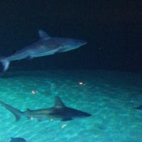 Photo taken at Shark Reef Aquarium by Roger M. on 6/11/2012