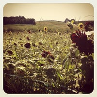 Photo taken at Lyman Orchards Sunflower Maze by Jennifer G. on 8/26/2012