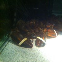 Photo taken at Red Lobster by Tina M. on 1/17/2013