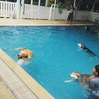 Foto tomada en Sa-by-jai Dog Swimming Pool por Pornsumond P. el 8/23/2015