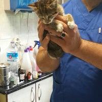 5/11/2014 tarihinde Burçin E.ziyaretçi tarafından Pet Planet Veteriner Kliniği'de çekilen fotoğraf