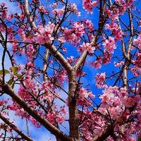 Photo taken at Japanese Friendship Garden by Mark P. on 3/23/2013
