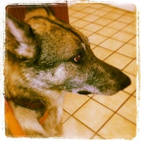 Photo taken at Chiquita Animal Hospital by Christopher S. on 1/11/2013