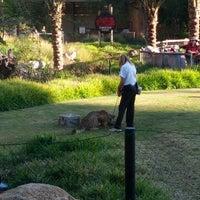 11/18/2012 tarihinde Dennis M.ziyaretçi tarafından Cheetah Run'de çekilen fotoğraf