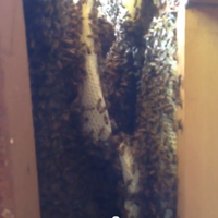 Photo taken at Miami Bee Removal Corp. by Miami Bee Removal Corp. on 11/7/2013