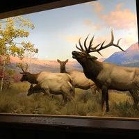 Photo prise au Hall of North American Mammals par Maria A. R. le1/30/2018