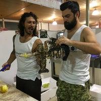 Mercato del pesce alghero