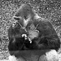 Photo taken at Zoo Schmiding by Mark B. on 3/12/2016