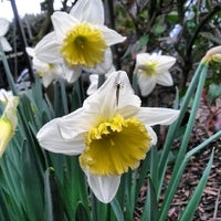 Photo taken at Bishop Lucey Park (The Peace Park) by Katrina T. on 3/17/2014